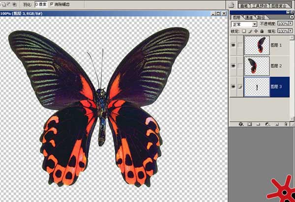 昆虫模型制作步骤