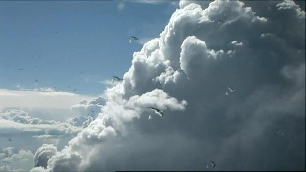 英国Daniel Kleinman广告短片《Stork》