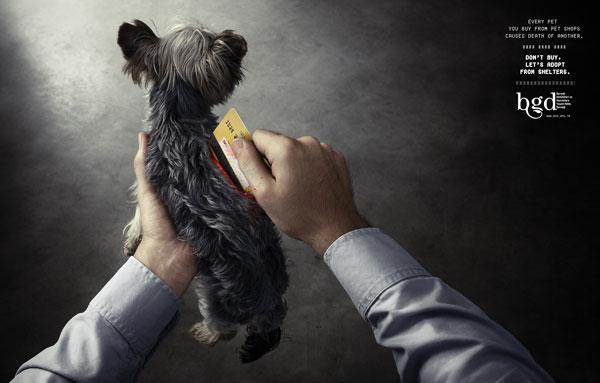 动物保护平面公益广告设计